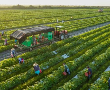 vegaetables farming